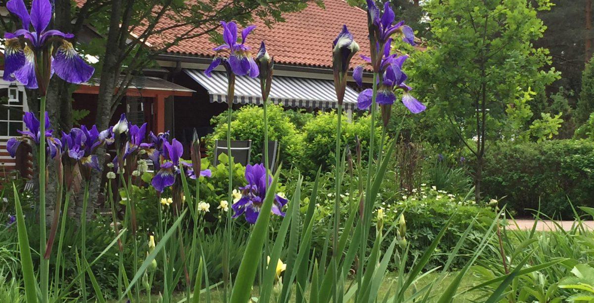Villabranten kasvaa pihasta puutarhaksi