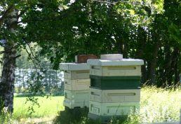 Näillä mehiläisillä on mainiot pesät järvinäkymin.
