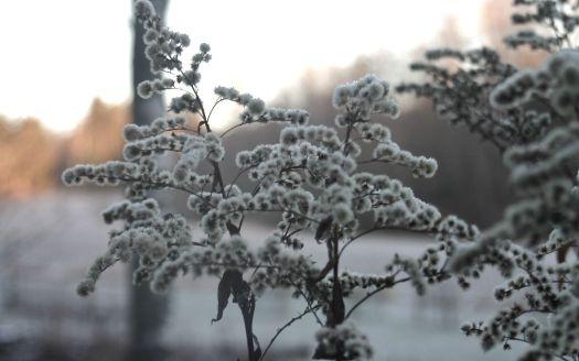 talvi