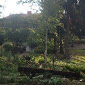 Alapihan istutusalue muokkautuu syksyllä 2012
